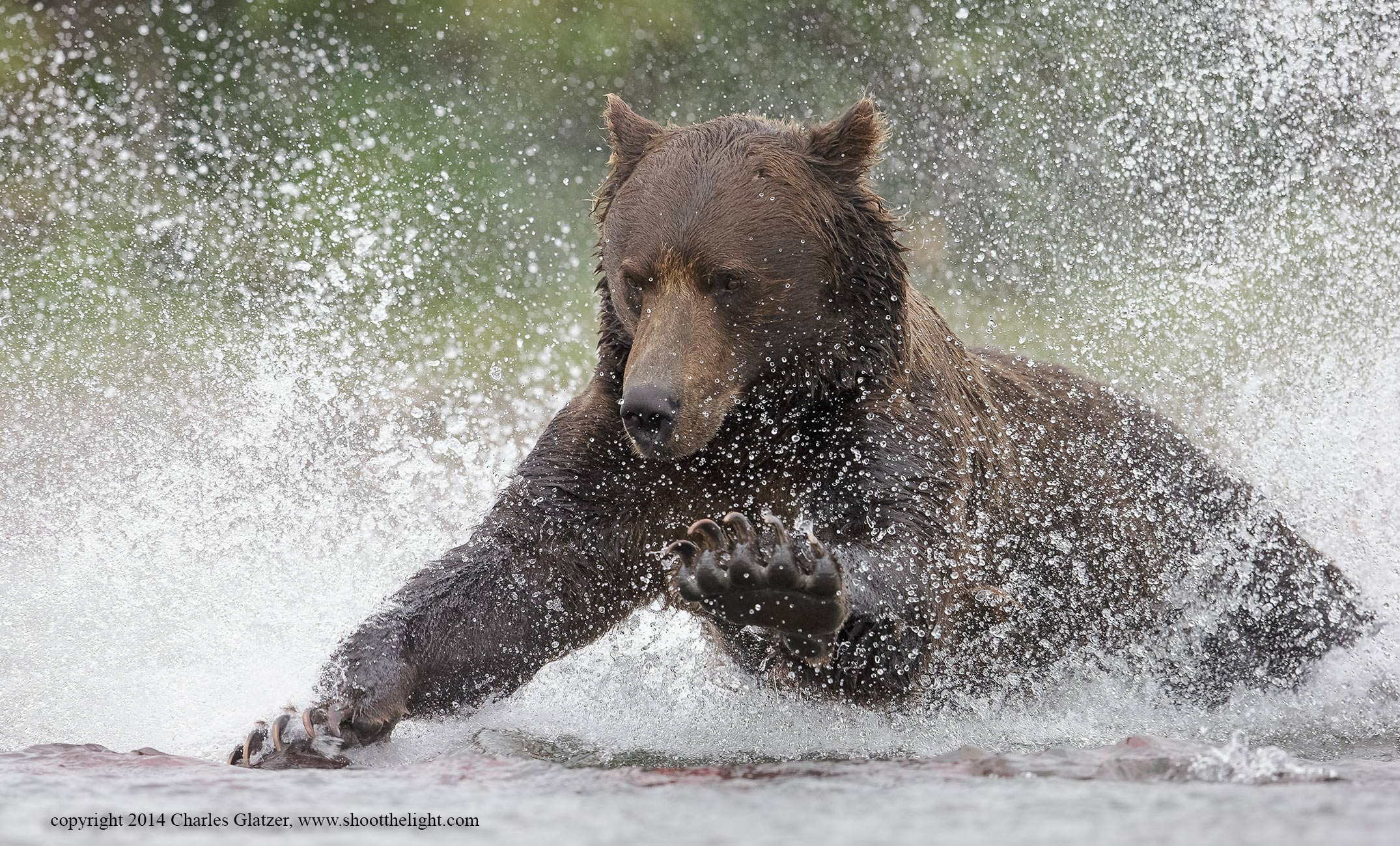 brown-bear-0607-Edit